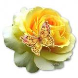 gelbe rose m. schmetterling