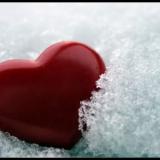 herz der liebe