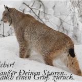 Hey Schleicher...