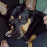 Hund Kira1