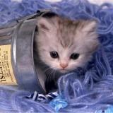 Katze im Eimer
