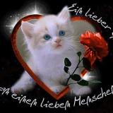 Katze mit Herz