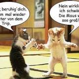 Katzenunterhaltung
