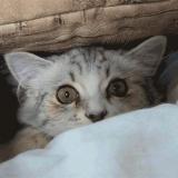 Leuchtende Katze