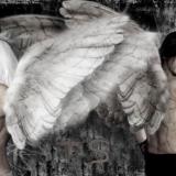 Light Angel vs Dark Angel