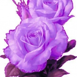 lila rosen