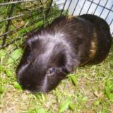 Meerschwein.2
