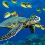 monika - die schildkröte