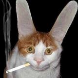 Raucherkatze