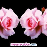 rosa rosenband