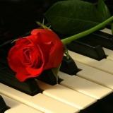 Rose der Musik