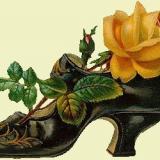 rose im schuh