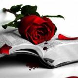 rose mit buch