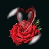 rose mit herz