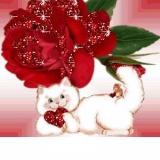 rose+katze