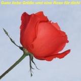 Rosenblüte 2a