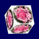 rosenwürfel