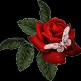 rose+schmetterling1