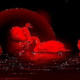 rote schwäne