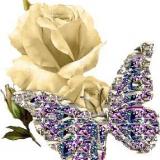 Schmetterling auf Rose