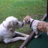 Tarra + Timmy