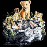 tiger babys
