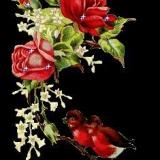 vögelchen+rose