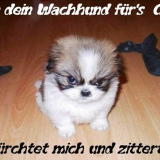 Wachhund
