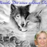 wolf - schöner tag