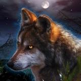Wolf bei Nacht