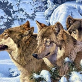 Wolfe im Schnee