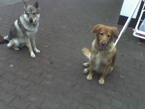 Tonga&Upsi