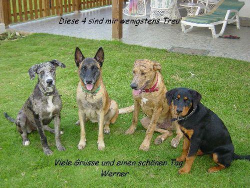 Treue Hunde