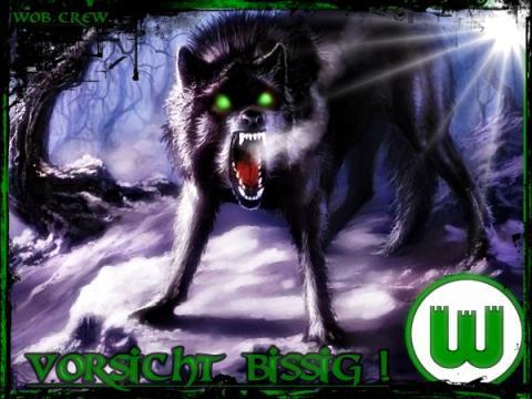 vfl wolf