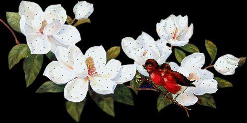 vögelchen+kirschblüten