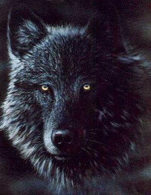 Wolf Kostenlose Gästebuchbilder